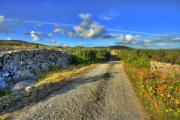 Old Burren Road Fine Art Print by John Quinn