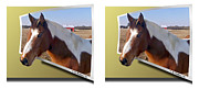 Crossview Framed Prints - Pony Pose - Gently cross your eyes and focus on the middle image Framed Print by Brian Wallace