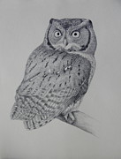 Falcon Drawings Metal Prints - Screech Owl Metal Print by Alan Suliber