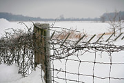 Barbed Wire Framed Prints - Snow fence  Framed Print by Sandra Cunningham