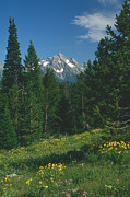 Jerry McElroy - Teton Meadow