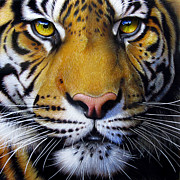 Tiger Painting Framed Prints - Tiger Framed Print by Jurek Zamoyski