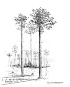 Alabama Drawings Framed Prints - Alabama - Southern Longleaf Pine Framed Print by Jim Hubbard