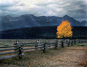 Old Fence Framed Prints - Autumn Light Framed Print by Leland Howard