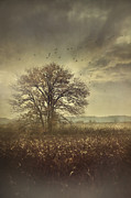 Sandra Cunningham - Lone tree in autumn farm field