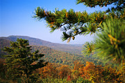 Autumn Scenes Prints - Pine Tree And Forested Ridges Print by Raymond Gehman