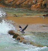 Wild Birds Digital Art Originals - Wild Birds At Laguna by Todd L Thomas