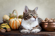 Thanksgiving Art Prints - Cat and Pumpkins Print by Nailia Schwarz