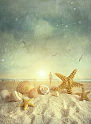 Sunlight Posters - Starfish and seashells  at the beach Poster by Sandra Cunningham