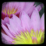 Digital Fine Art Photography  - Photography floral art  by Ricki Mountain