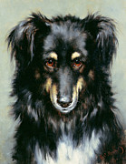 Robert Morley - A Black and Tan Collie