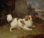 William Webb - A Blenheim Spaniel