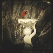 Gothicolors With Crows - A Cardinal