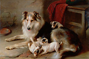 Walter Hunt - A Collie with Fox Terrier Puppies