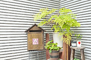 Frame House Photos - A Corner Outside A House With A Mailbox by Lawren Lu