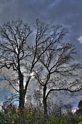 Bare Trees Photos - A Fall Sky by David Bearden