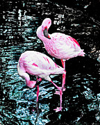 Lizi Beard-Ward - A Flamingos Day