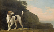 George Stubbs - A Foxhound