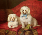 English School - A Pair of Poodles