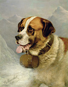 James E Bourhill - A Portrait of a St. Bernard