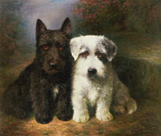 Lilian Cheviot - A Scottish and a Sealyham Terrier