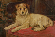 Wright Barker - A Terrier on a Settee