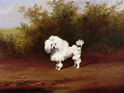 Frederick French - A Toy Poodle in a Landscape