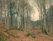 JT Watts - A Welsh Wood in Winter