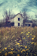 Sandra Cunningham - Abandoned country farmhouse overgrown...
