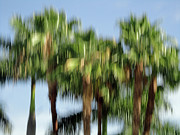 Juergen Roth - Abstract Florida Royal Palm Trees