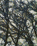 Trees Abstract Tree Lines Forest Wood Prints - Abstract Trees Print by Elizabeth Coats