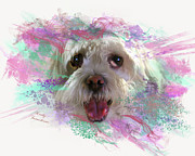 Animal Shelter Digital Art - Adopt Me by Kathy Tarochione