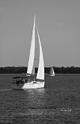 Suzanne Gaff - Afternoon for Sailing in Black and White