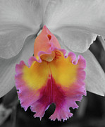 Extreme Floral Images - Amazing Orchid by Kathy Dahmen