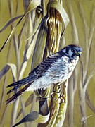 Corn Paintings - American Kestrel by Greg Halom