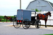 TSC Photography Timothy Cuffe Jr - Amish35