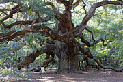 Suzanne Gaff - Angel Oak - Dont Climb or Carve on the...