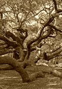 Suzanne Gaff - Angel Oak in Sepia