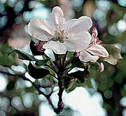 RC DeWinter - Apple Blossom Time