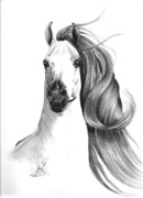 Drawing Of A Horse Head Framed Prints - Arabian Horse Framed Print by Cheryl Poland
