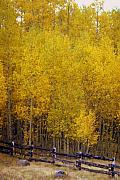 Marty Koch - Aspen Fall 2
