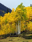 Marty Koch - Aspen Fall 3