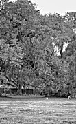 Steve Harrington - Audubon Park 2 monochrome