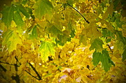 Yellow Leaf Photos - Autumn - Mellow Time by Gwyn Newcombe