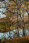 Landscape Posters Framed Prints - Autumn 46 Framed Print by Joyce StJames