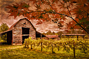 Debra and Dave Vanderlaan - Autumn Cabernet