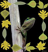 Maria Urso - Artist and Photographer - Autumn Gecko