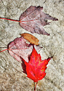 Dan Carmichael - Autumn Leaves on a Rock I