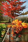 Sandra Cunningham - Autumns colorful harvest