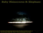 Elephant Reliefs - Baby Rhinoceros And Elephant  by Phillip H George